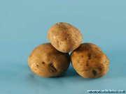 Продам семена картофеля Санте