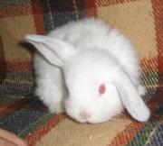 карликовые кролики - лучшие друзья