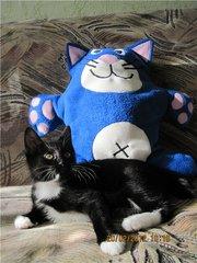 Предлагается котенок Курильского бобтейла с отличной родословной.