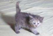 Плюшевые котята почти даром
