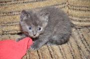 Трехцветные кошки — к счастью и деньгам!