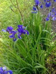 Свои садовые растения