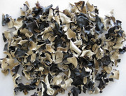 Черный древесный гриб (Муэр)