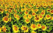 посевной материал сзр растений микроудобрения