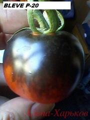 Продам семена сортовых томатов,  в том числе уникальных окрасов и форм