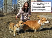 Профессиональный инструктор по вязке собак в Харькове