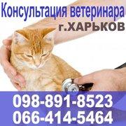 Вызов ветеринара на дом. Консультация ветеринара. Харьков
