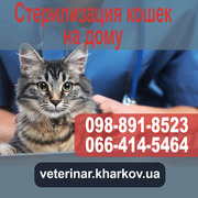 Стерилизация кошек в Харькове на дому - 950 грн.