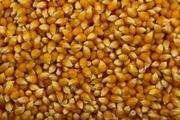 Ячмень,  кукуруза в мешках