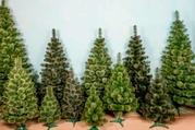 Сосна искусственная. Ели и елки искусственные.