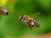 Продам пчелосемьи с 15 апреля 2019 года